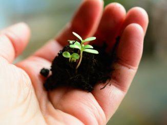 Investice rostou zejména do zahradničení